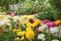Kleurrijke Bloemen in de tuin Royalty-vrije Stock Foto