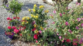 Kleurrijke bloemen in de wind stock videobeelden