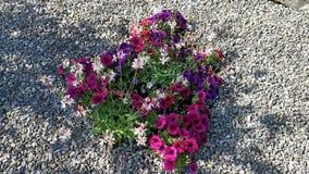 Kleurrijke bloemen in de wind stock video