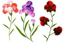 Kleurrijke bloemen die op witte achtergrond worden geïsoleerd stock fotografie