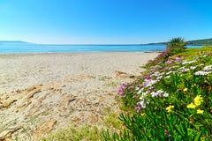 Kleurrijke bloemen door de kust in het strand van Le Bombarde royalty-vrije stock foto