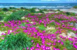 Kleurrijke bloemen door Platamona kust stock foto