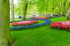 Kleurrijke bloemen en bloesem in Nederlandse de lentetuin Keukenhof Royalty-vrije Stock Afbeelding