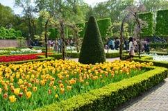 Kleurrijke bloemen en bloesem in Nederlandse de lentetuin Keukenhof Royalty-vrije Stock Foto