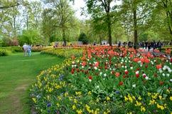 Kleurrijke bloemen en bloesem in Nederlandse de lentetuin Keukenhof die de grootste de bloemtuin van de wereld is Stock Foto