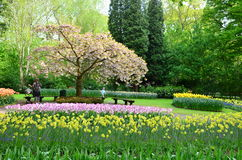 Kleurrijke bloemen en bloesem in Nederlandse de lentetuin Keukenhof die de grootste de bloemtuin van de wereld is Royalty-vrije Stock Afbeeldingen