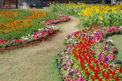 Kleurrijke bloemen en een verscheidenheid van die species in de tuin worden gecombineerd stock foto