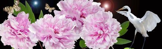 Kleurrijke bloemen en witte reigergrens Stock Fotografie