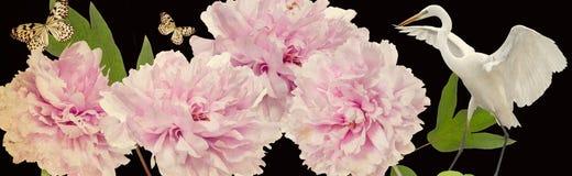 Kleurrijke bloemen en witte reigergrens Stock Afbeeldingen