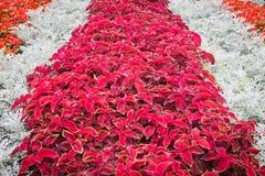 Kleurrijke bloemen in het bloembed in het park Stock Fotografie