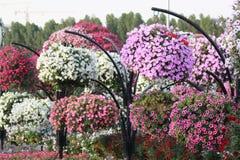 Kleurrijke bloemen in het mirakeltuin van Doubai, de V.A.E Stock Afbeeldingen