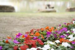 Kleurrijke bloemen met onduidelijk beeldachtergrond Stock Foto
