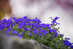 Kleurrijke bloemen op de omheining Stock Afbeelding