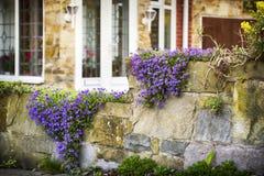 Kleurrijke bloemen op de omheining Royalty-vrije Stock Foto's