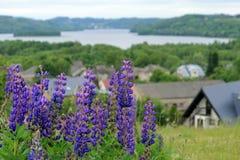 Kleurrijke bloemen op de weide stock fotografie