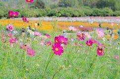 Kleurrijke bloemen in openbare tuin mooie visie bij de zomer Royalty-vrije Stock Foto's