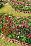 Kleurrijke bloemen over de houten omheining Stock Afbeeldingen