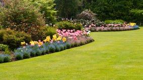 Kleurrijke bloemen in tuin stock afbeelding