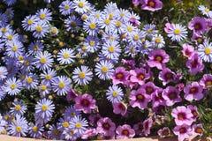 Kleurrijke bloemen in volledige bloei royalty-vrije stock fotografie