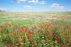Kleurrijke bloemen in weide Stock Afbeelding