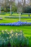 Kleurrijke bloemenbloesem in Nederlandse de lentetuin Stock Foto