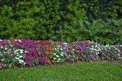 Kleurrijke bloemhaag Stock Foto's