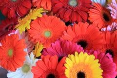 Kleurrijke bloemmengeling Stock Afbeelding