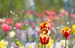 Kleurrijke bloemtuin stock foto's