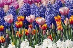 Kleurrijke bloemtuin stock fotografie