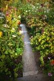 Kleurrijke bloemtuin Stock Foto