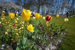 Kleurrijke bloemtuin in spri royalty-vrije stock afbeeldingen