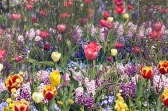 Kleurrijke bloemtuin in spri Stock Foto