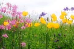 Kleurrijke bloemweide Stock Foto's