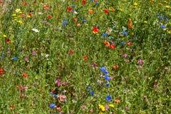 Kleurrijke bloemweide stock foto