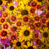 Kleurrijke bloesemachtergrond Stock Afbeeldingen