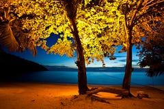 Kleurrijke bomen Royalty-vrije Stock Foto's