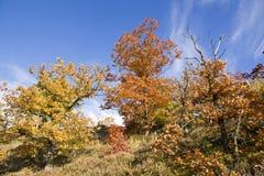 Kleurrijke bomen Stock Foto's