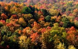Kleurrijke Bomen Stock Foto
