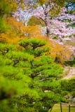 Kleurrijke Bomen stock fotografie