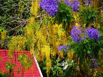 Kleurrijke bomen in bloei Stock Afbeeldingen