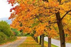 Kleurrijke bomen in de herfst Stock Foto's