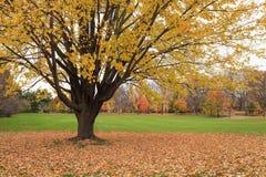 Kleurrijke bomen in de herfst Royalty-vrije Stock Afbeeldingen