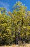 Kleurrijke bomen en blauwe hemel stock afbeelding
