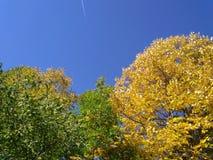 Kleurrijke bomen en blauwe hemel in vroege daling royalty-vrije stock foto