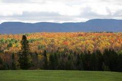 Kleurrijke bomen over een landelijke weg royalty-vrije stock fotografie