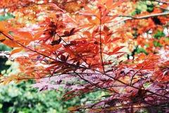 Kleurrijke Bomen in Ueno-Park Royalty-vrije Stock Fotografie