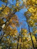 Kleurrijke boom royalty-vrije stock foto's