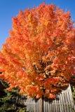 Kleurrijke boom in de herfst Royalty-vrije Stock Fotografie
