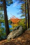 Kleurrijke boom in de herfst op de banken van Burr Pond royalty-vrije stock afbeelding