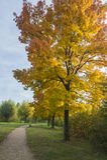 Kleurrijke boom in een park Royalty-vrije Stock Fotografie